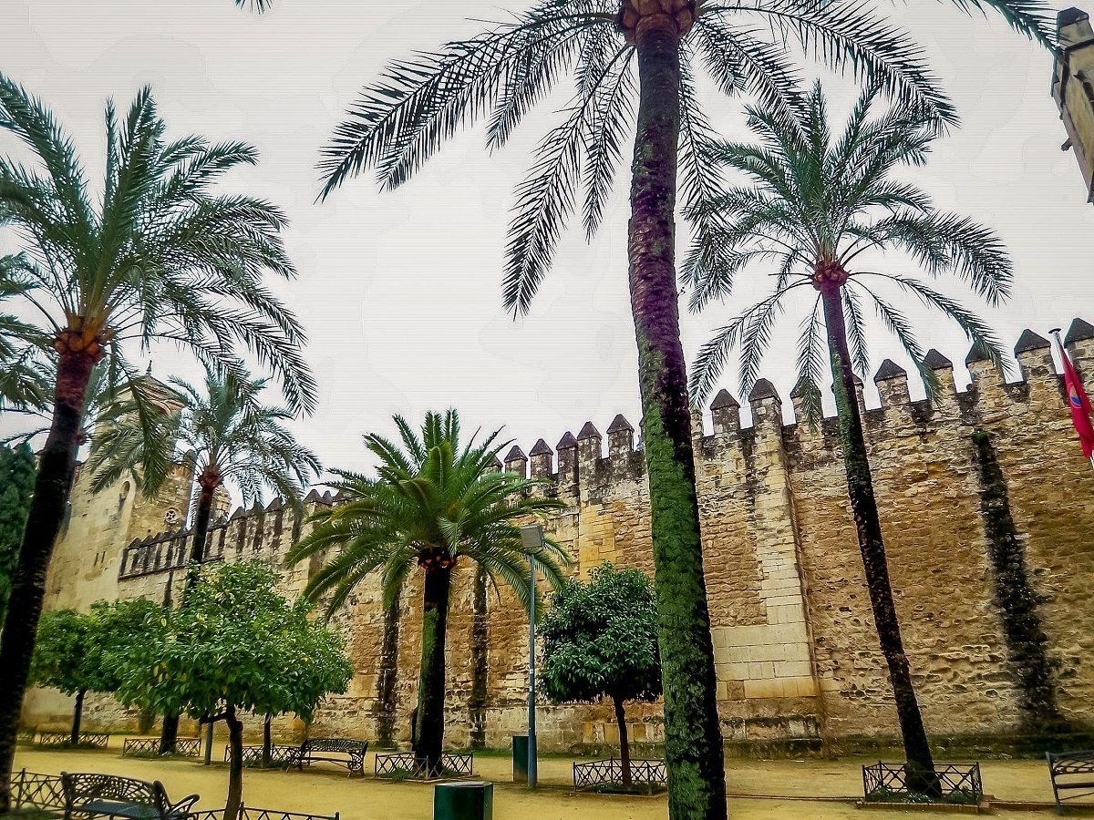 Palm trees in Spain.