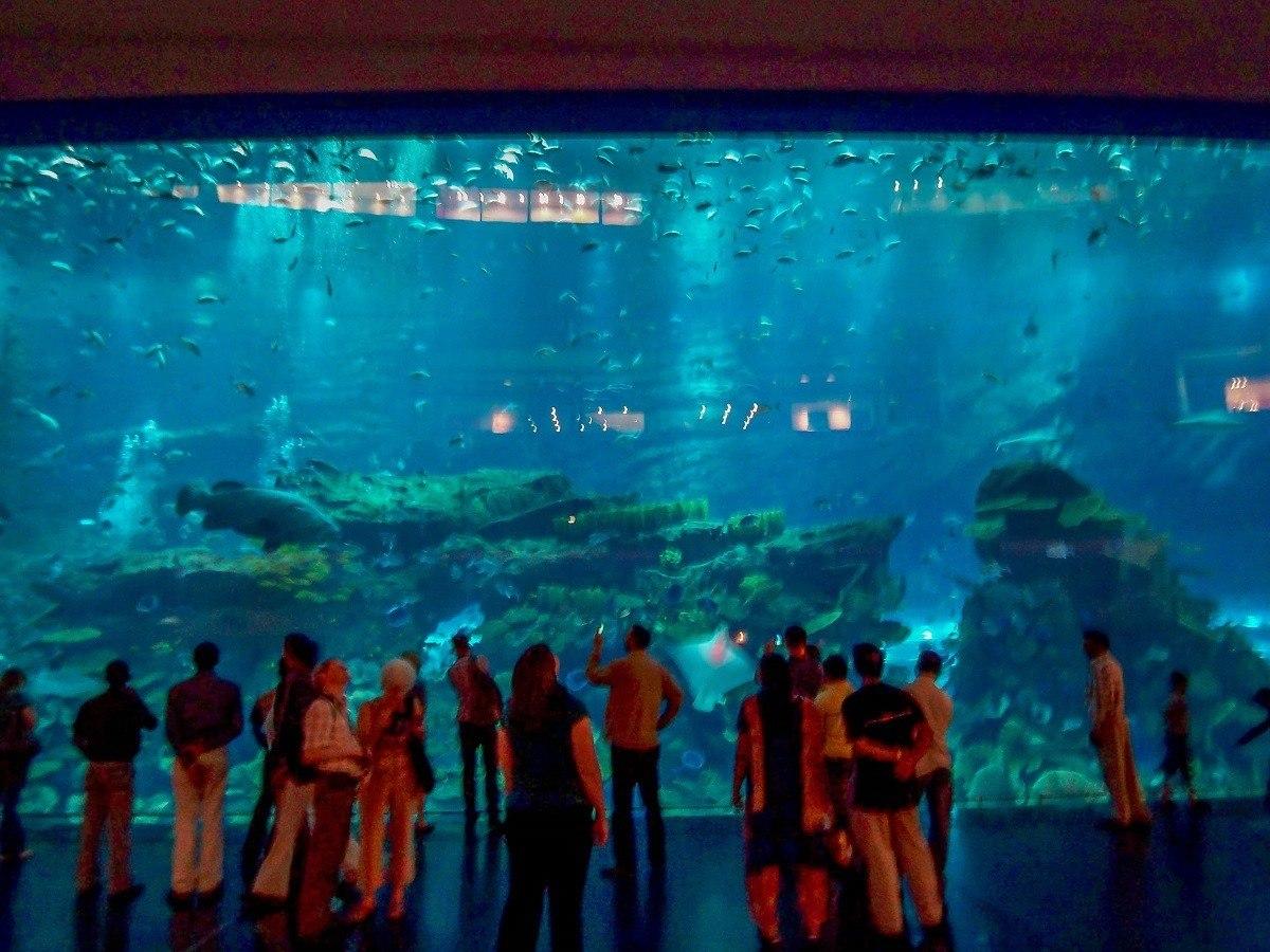 People looking at the aquarium at the Dubai Mall