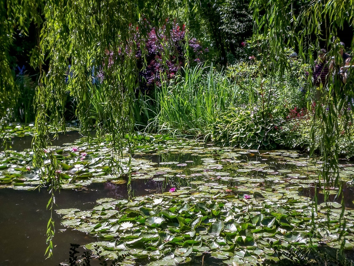 Claude Monet's garden and his famous water lilies