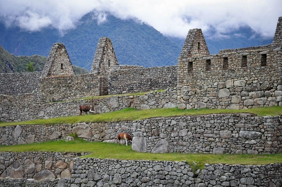 Llamas among the ruins of buildings