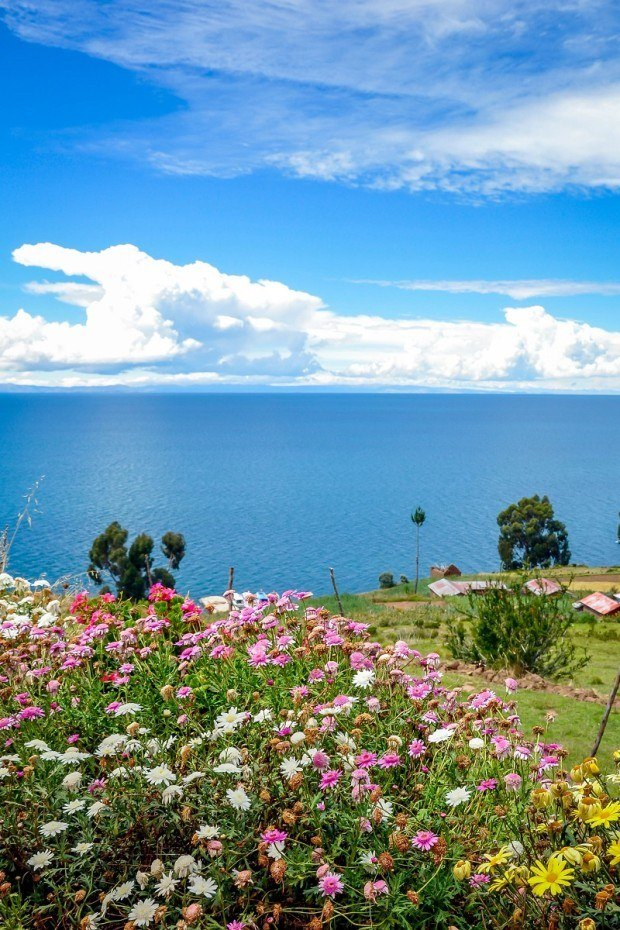 Flowers on Taquile Island in Lake Titicaca