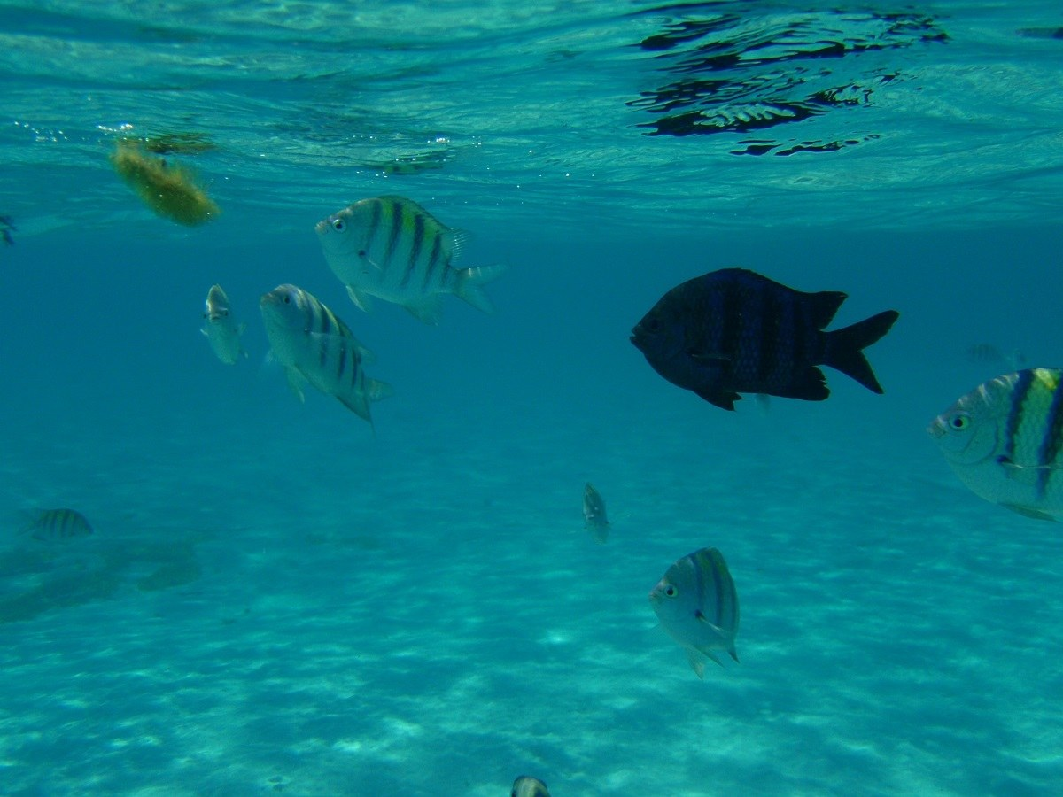 Seeing fish in the water while snorkeling