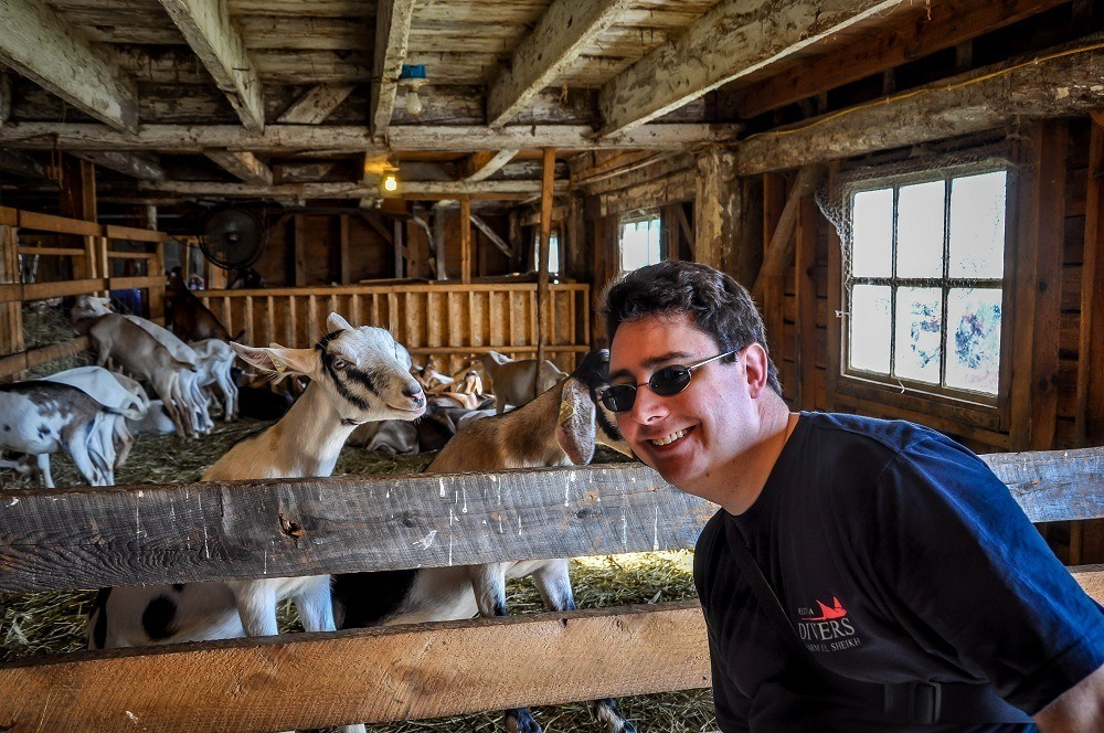 Man in a barn with goats