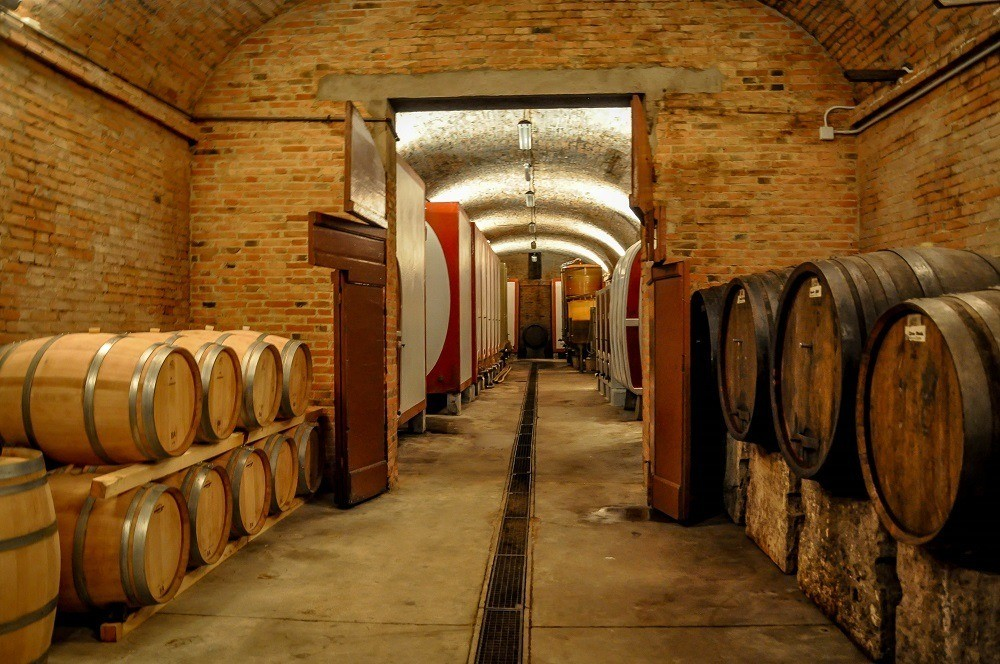 Wine cave at Fattoria Il Piano in San Gimignano during Cantine Aperte
