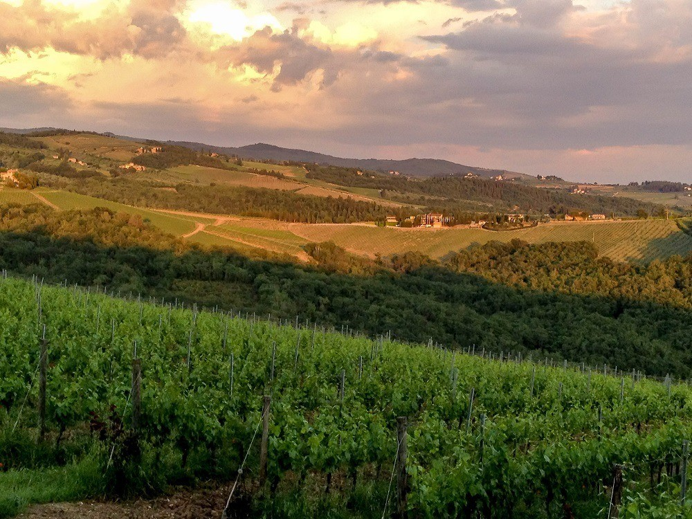 The Tuscany vineyards at sunset during the wine festival of Cantine Aperte in Italy