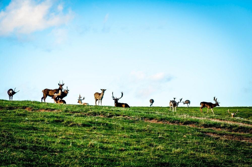 Animals roaming at Lake Tobias Wildlife Park near Hershey-Harrisburg