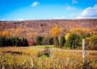 The Vineyards of the Hershey-Harrisburg Wine Country