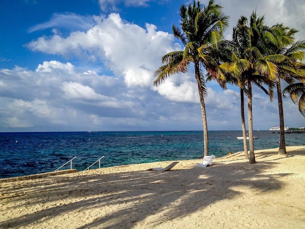 Palm trees on a beach beside the ocean