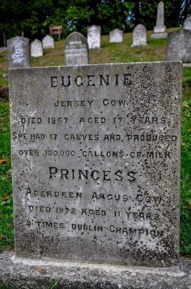 Tombstone in the witty and humorous pet cemetery