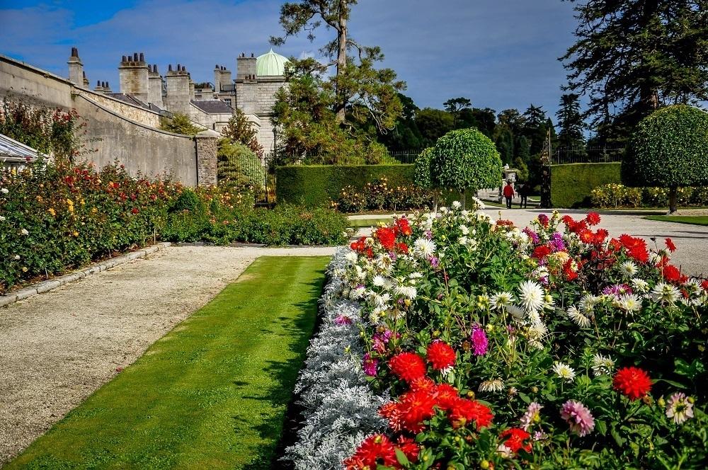 Roses in bloom inside the Wall Garden at Powerscourt Gardens