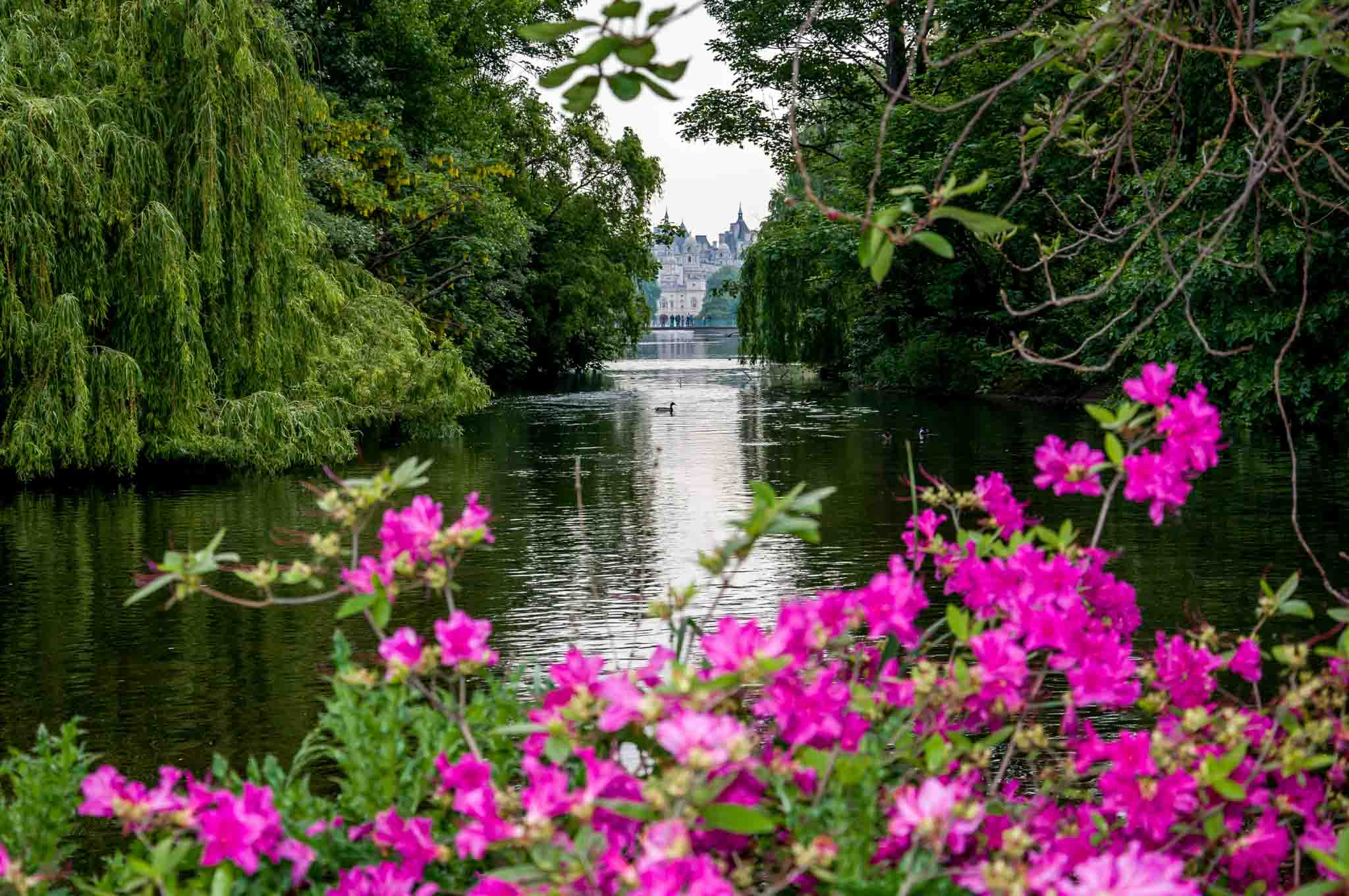 Pond and flowers in a park