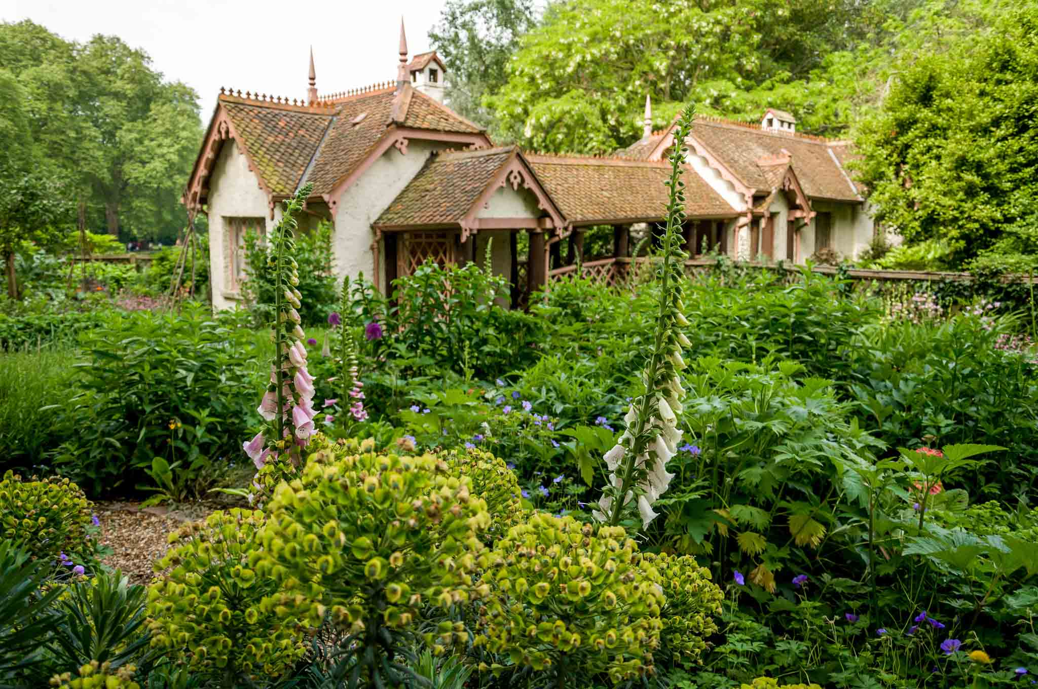 Cottage surrounded by plants and flowers