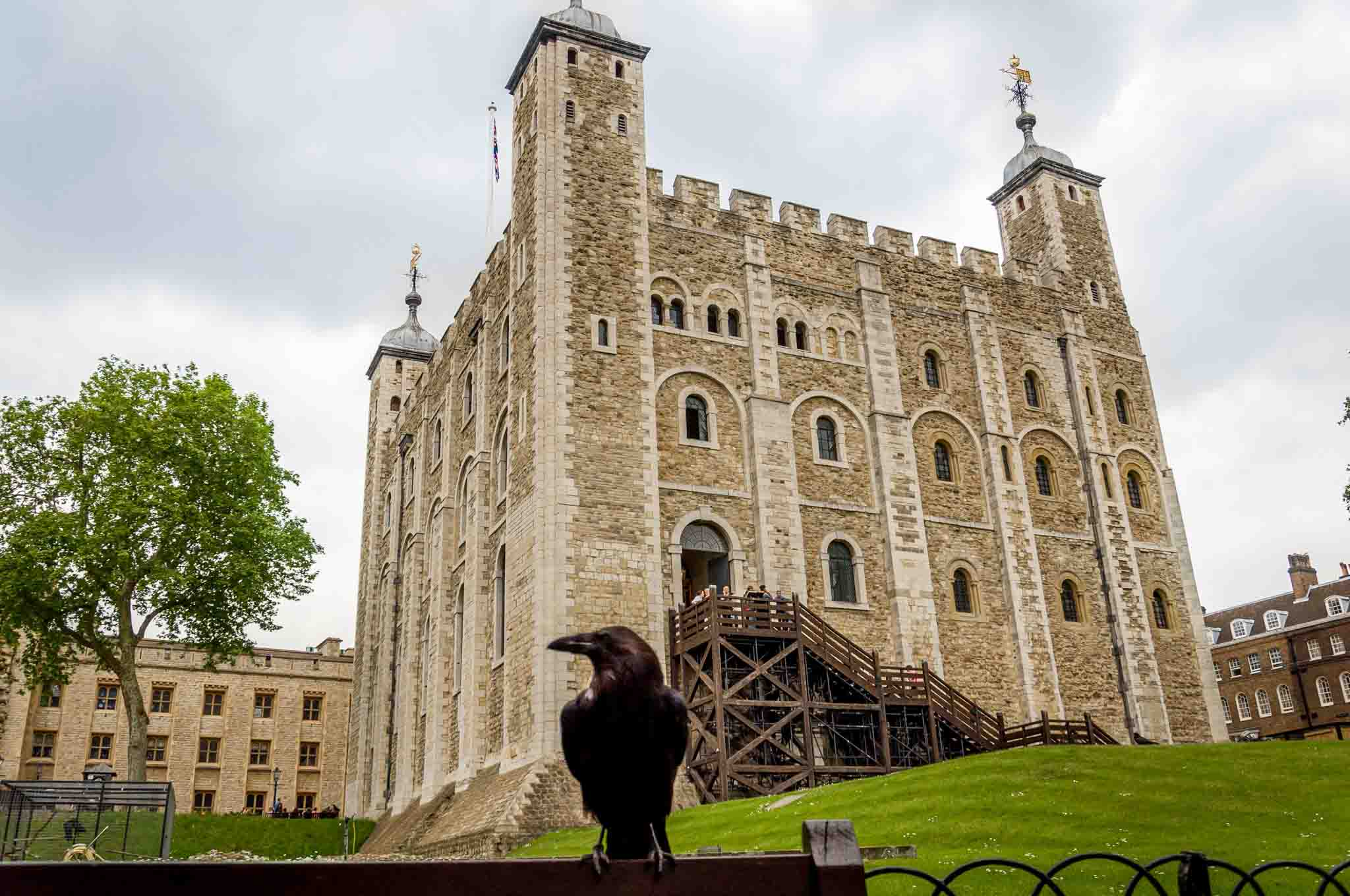 Raven in front of large stone building with turrets, the Tower of London