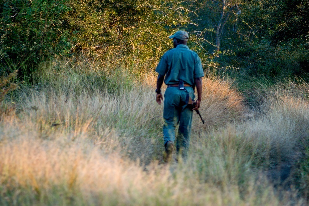 A tracker walking in the bush searching for animal tracks
