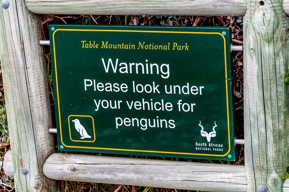 Sign saying Table Mountain National Park, Warning, Please look under your vehicle for penguins