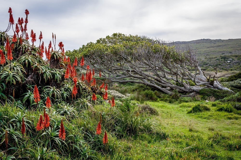 The flora of the Cape Peninsula outside of Cape Town