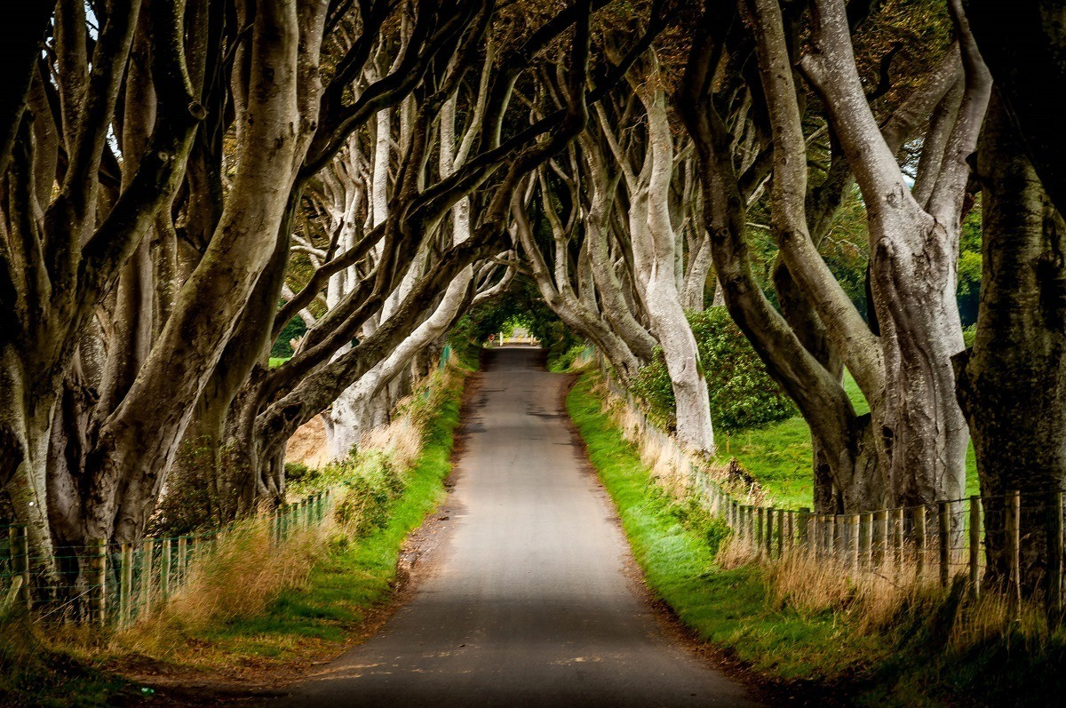 The Dark Hedges (featured in the Game of Thrones) are formed by beech trees.  While not officially part of the Causeway Coastal Route, this still makes striking visit before heading on the Antrim Coast Road.