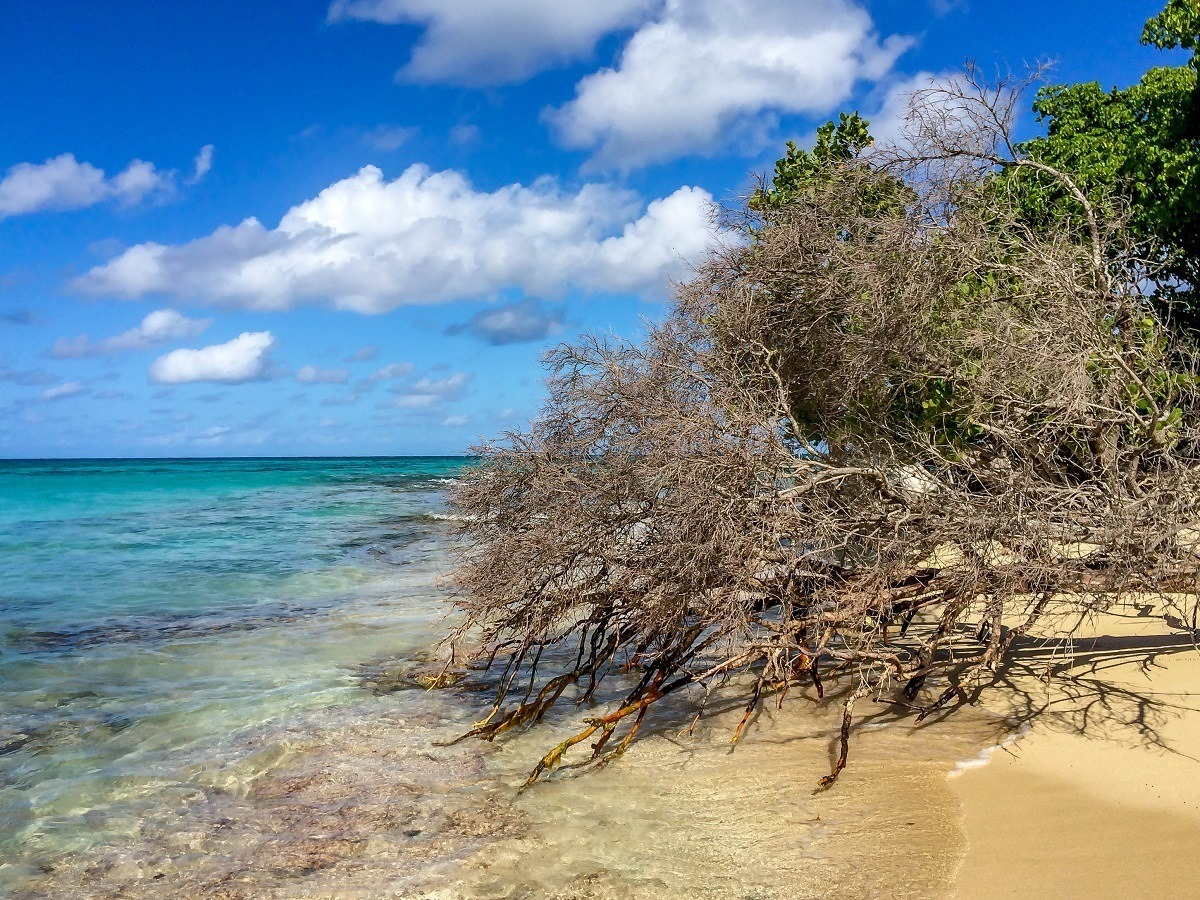 The shore of Buck Island Reef National Monument in St Croix