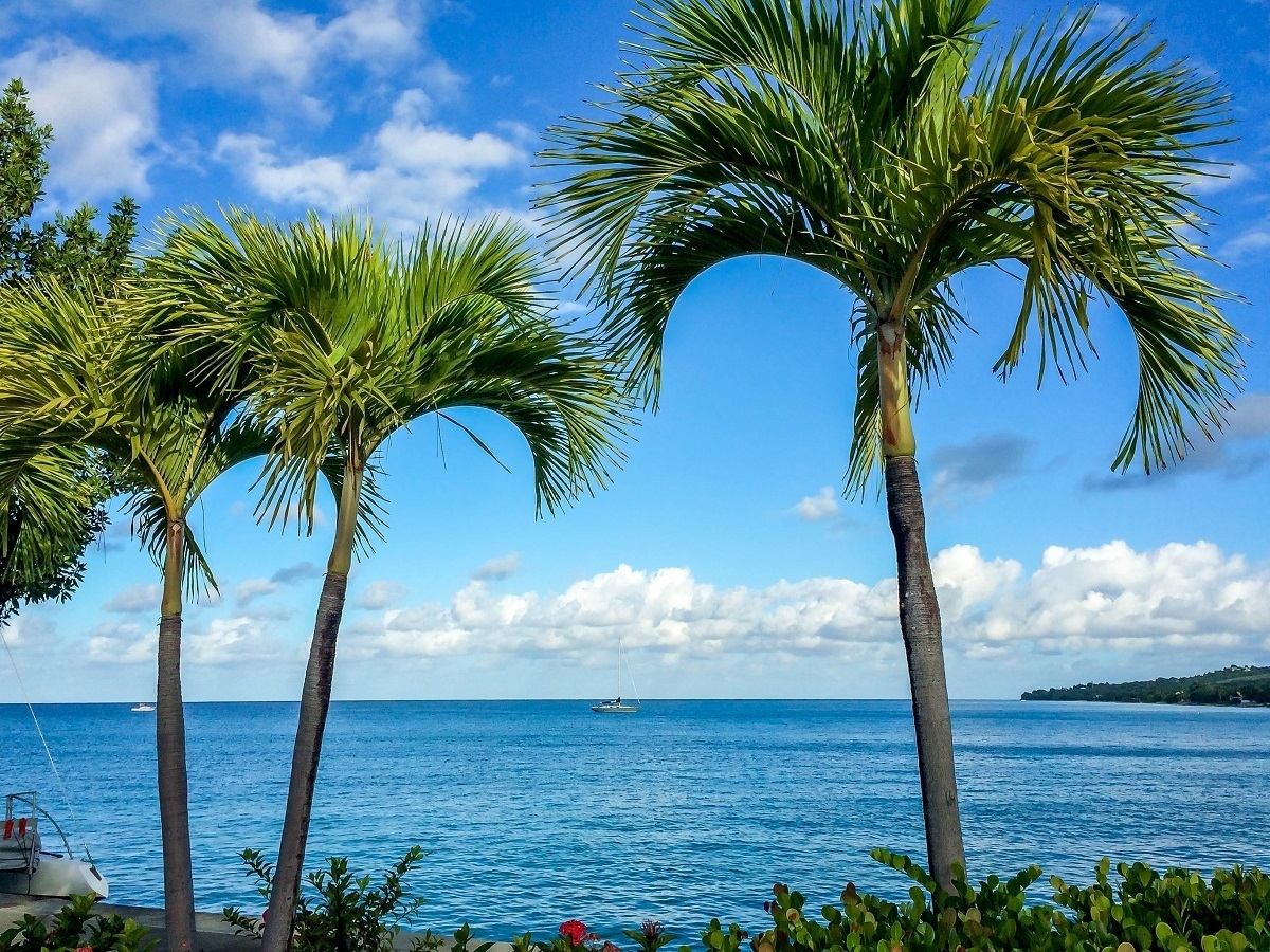 Palm trees in the port of Christiansted, St Croix
