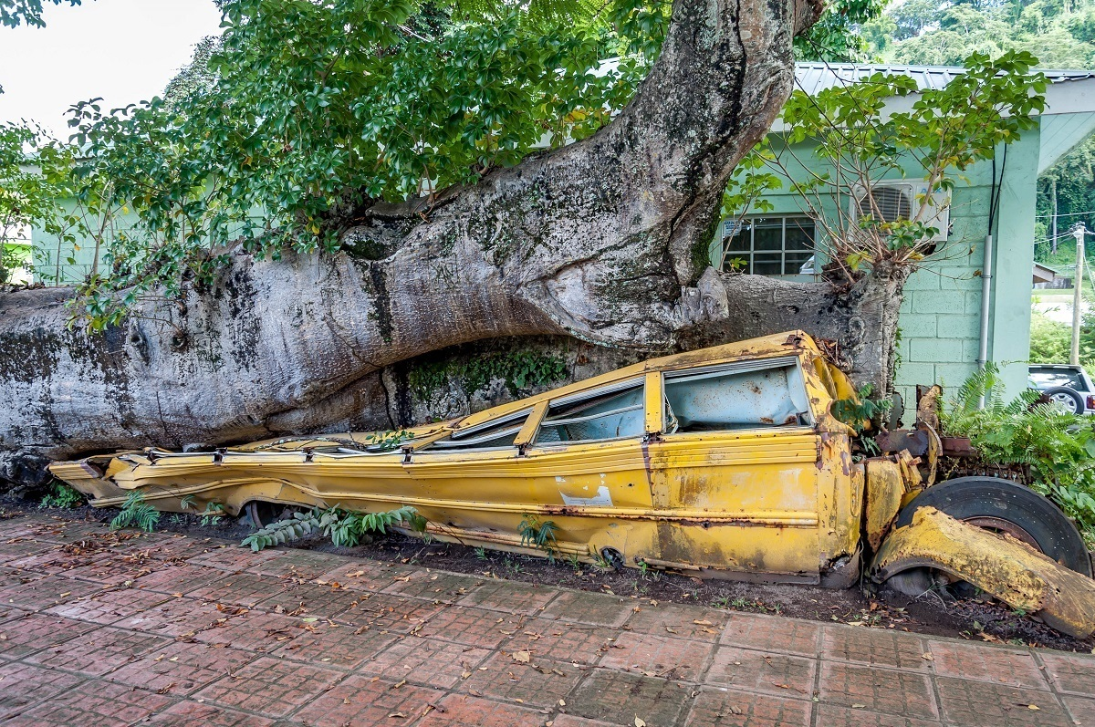 Yellow school bus crushed under a baobab tree