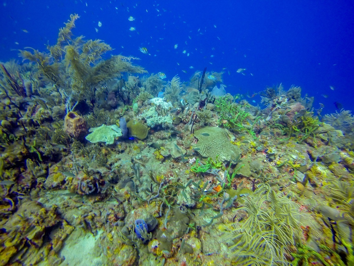 A reef while scuba diving in Grenada's Molinere Bay