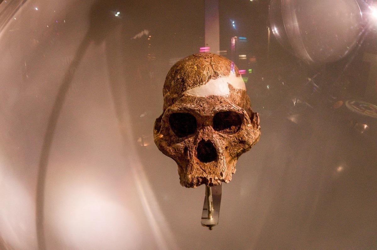 Skull at the Maropeng Visitors Center