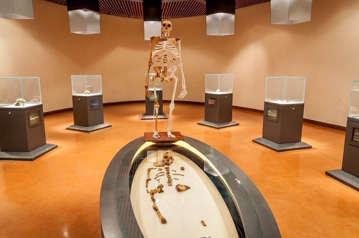 Skeletal artifacts at the Maropeng Visitors Center