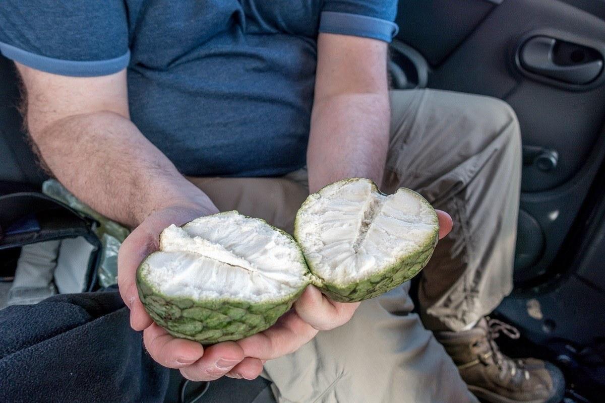 Person holding white, fleshy Chirimoya fruit