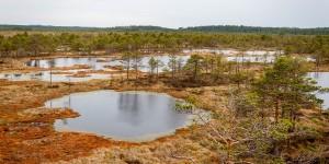 Bog walking in Estonia