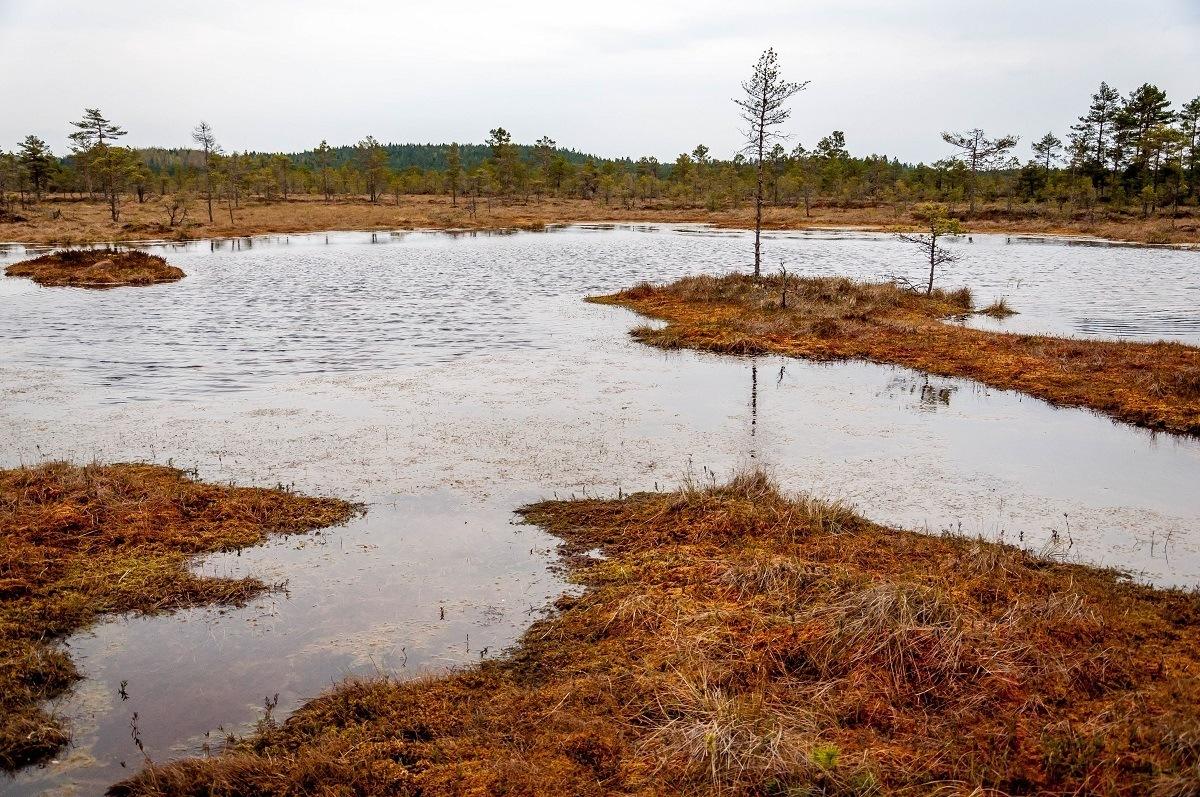 Reddish brown bog with water