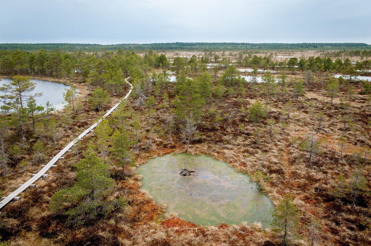 Above one of the Estonian bogs with walkway and trees