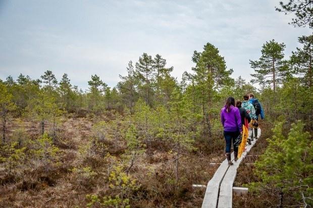 People walking on a platform through a bog