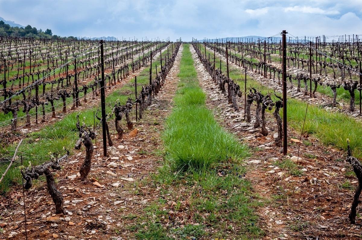 Vineyard on the Cotes du Rhone in France