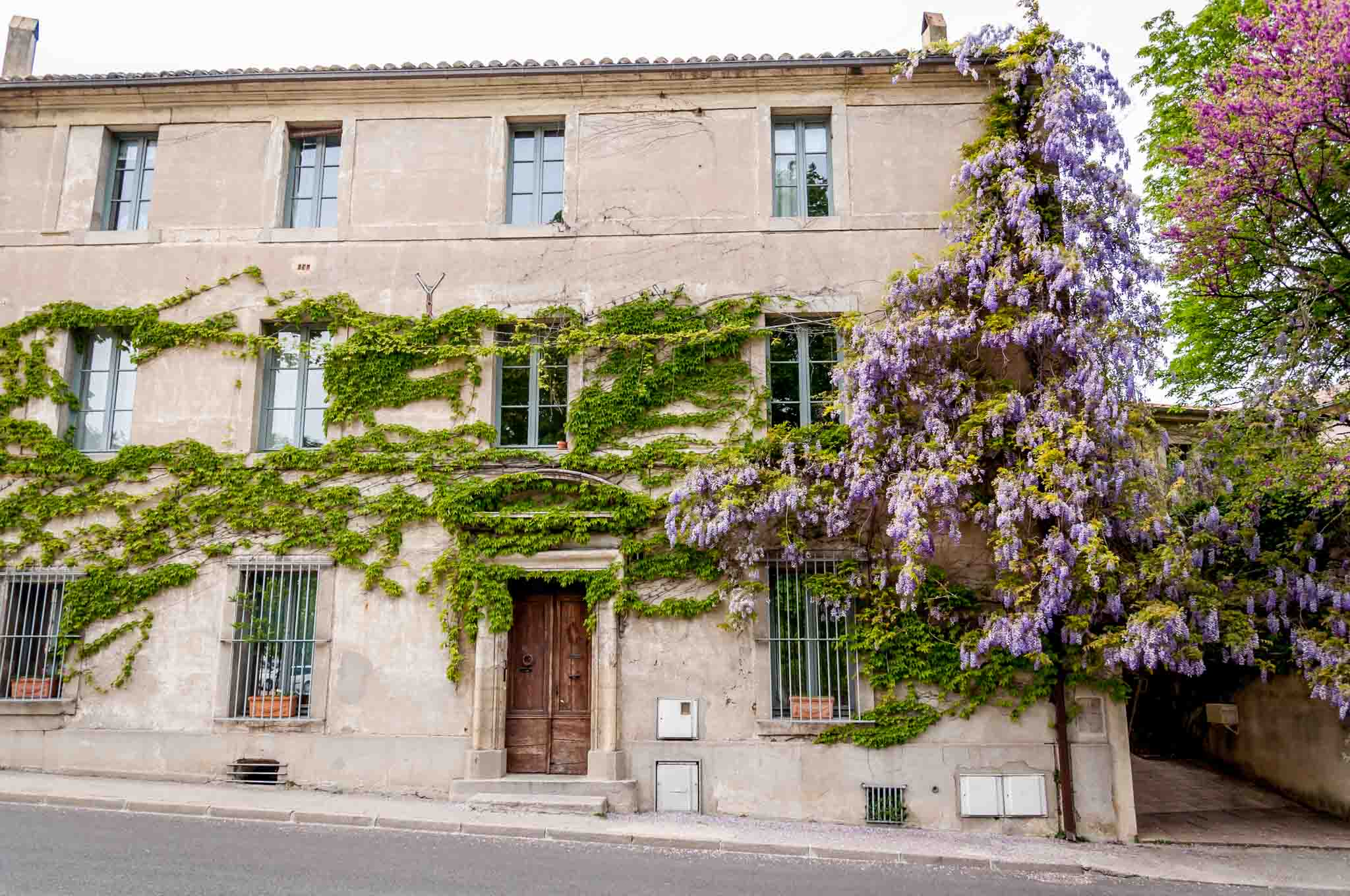 Building covered in ivy and wisteria