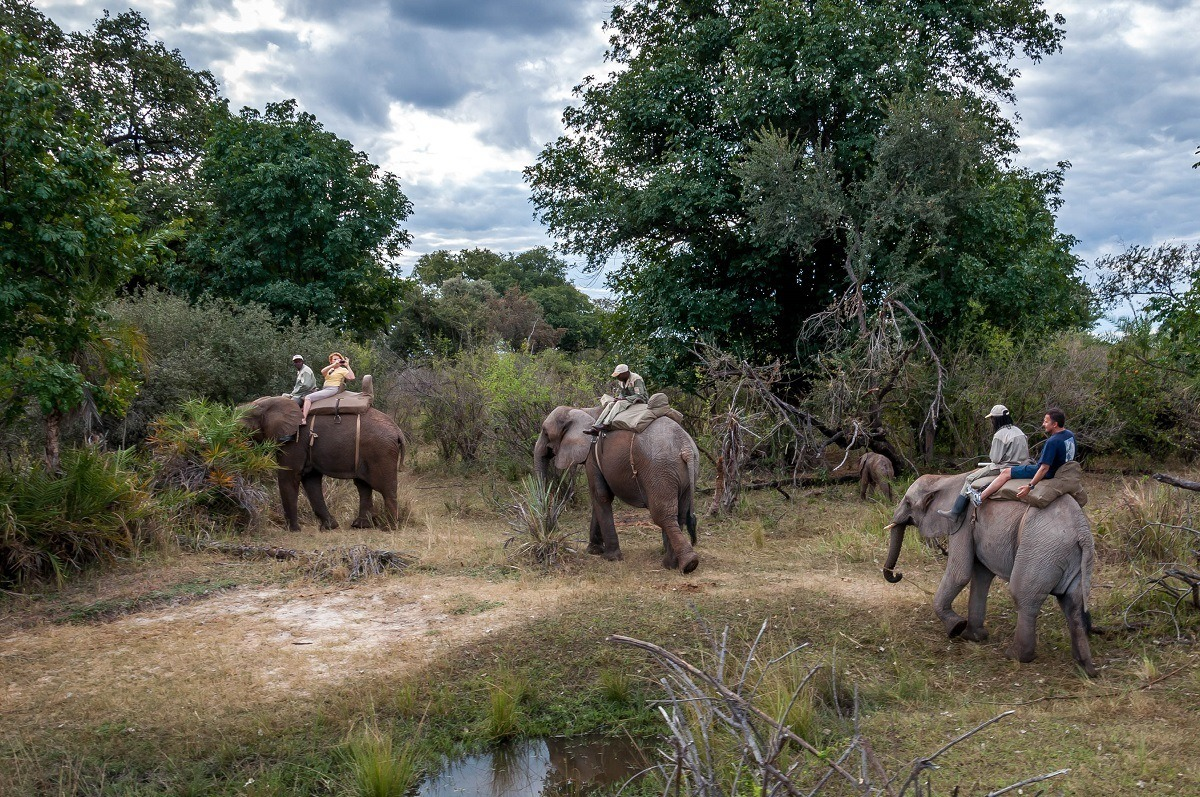 People riding elephants in Africa