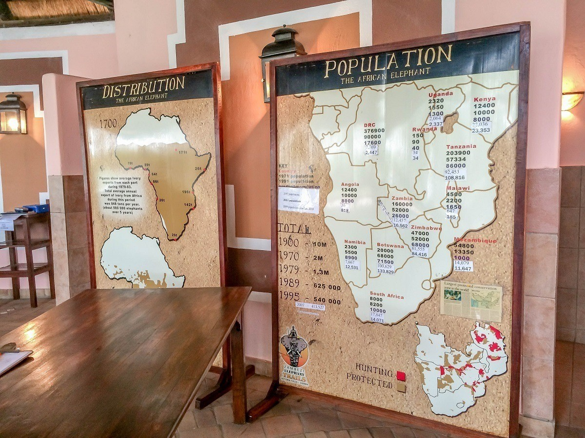 Posters with information about Africa's decreasing elephant population