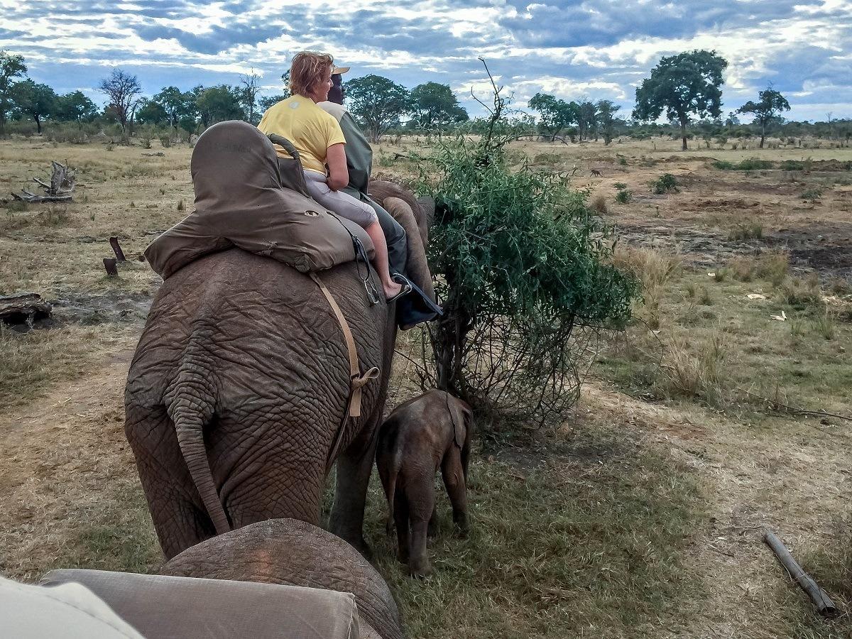 People riding adult elephant alongside baby elephant