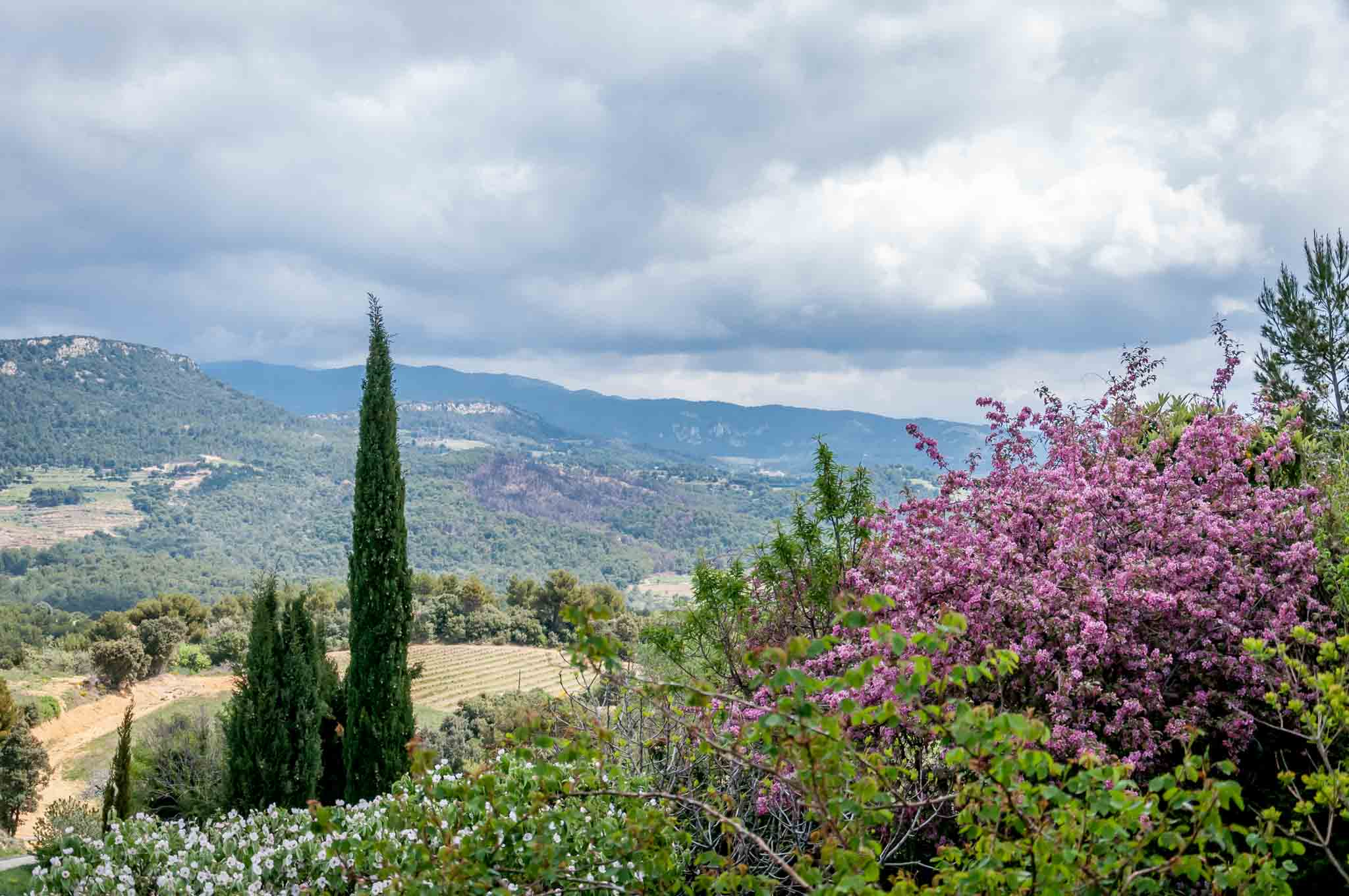 Mountains, trees, and flowers of  the Cotes du Rhone valley