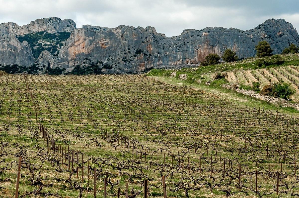 Vineyards of Domaine de Coyeux in the Cotes du Rhone region