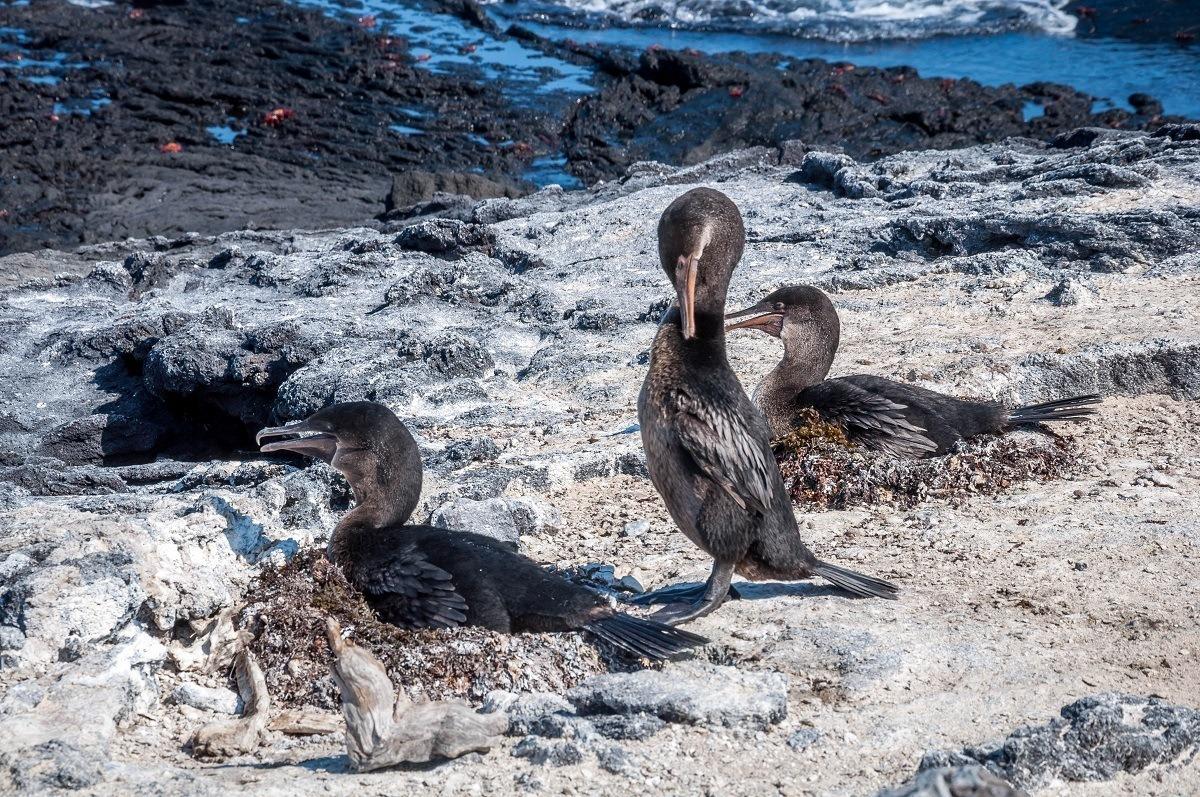 Three brown birds on land