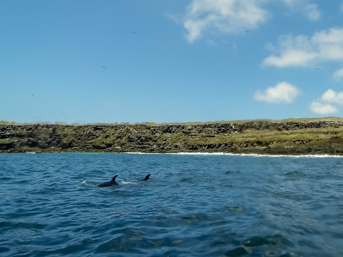 Dolphins swimming in the ocean off of an island