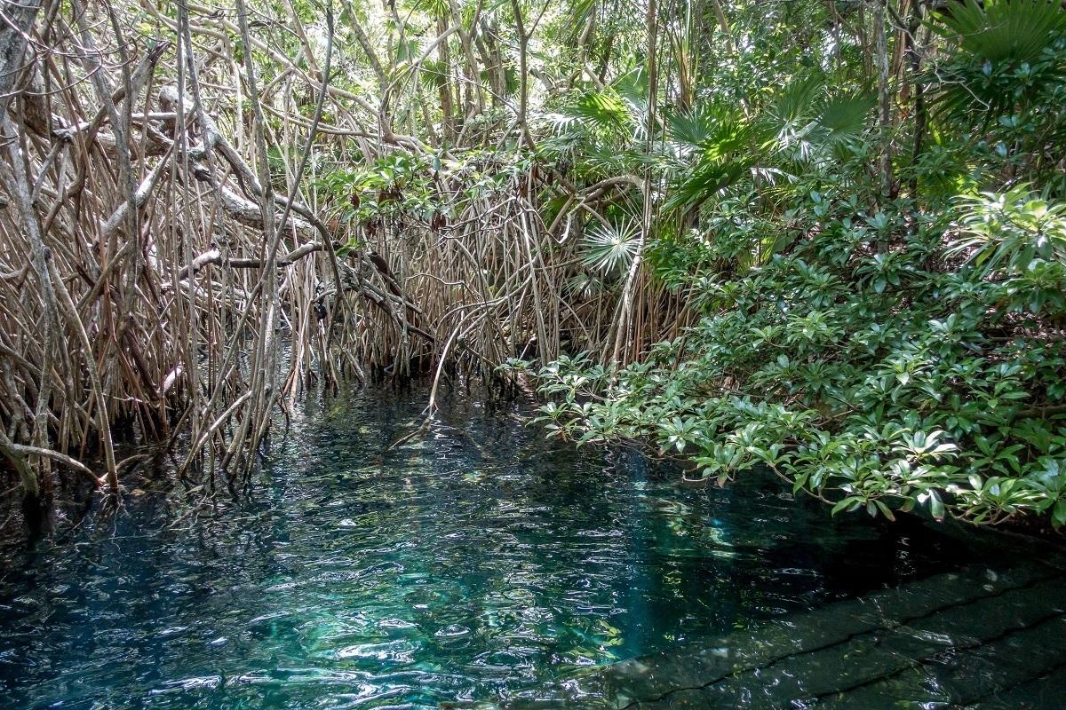 River entrance shrouded in mangroves