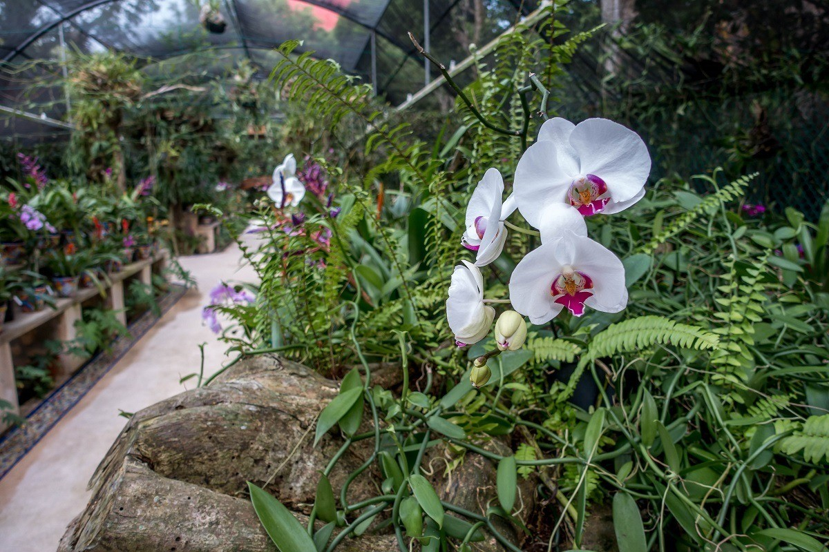 Orchids in an indoor rainforest