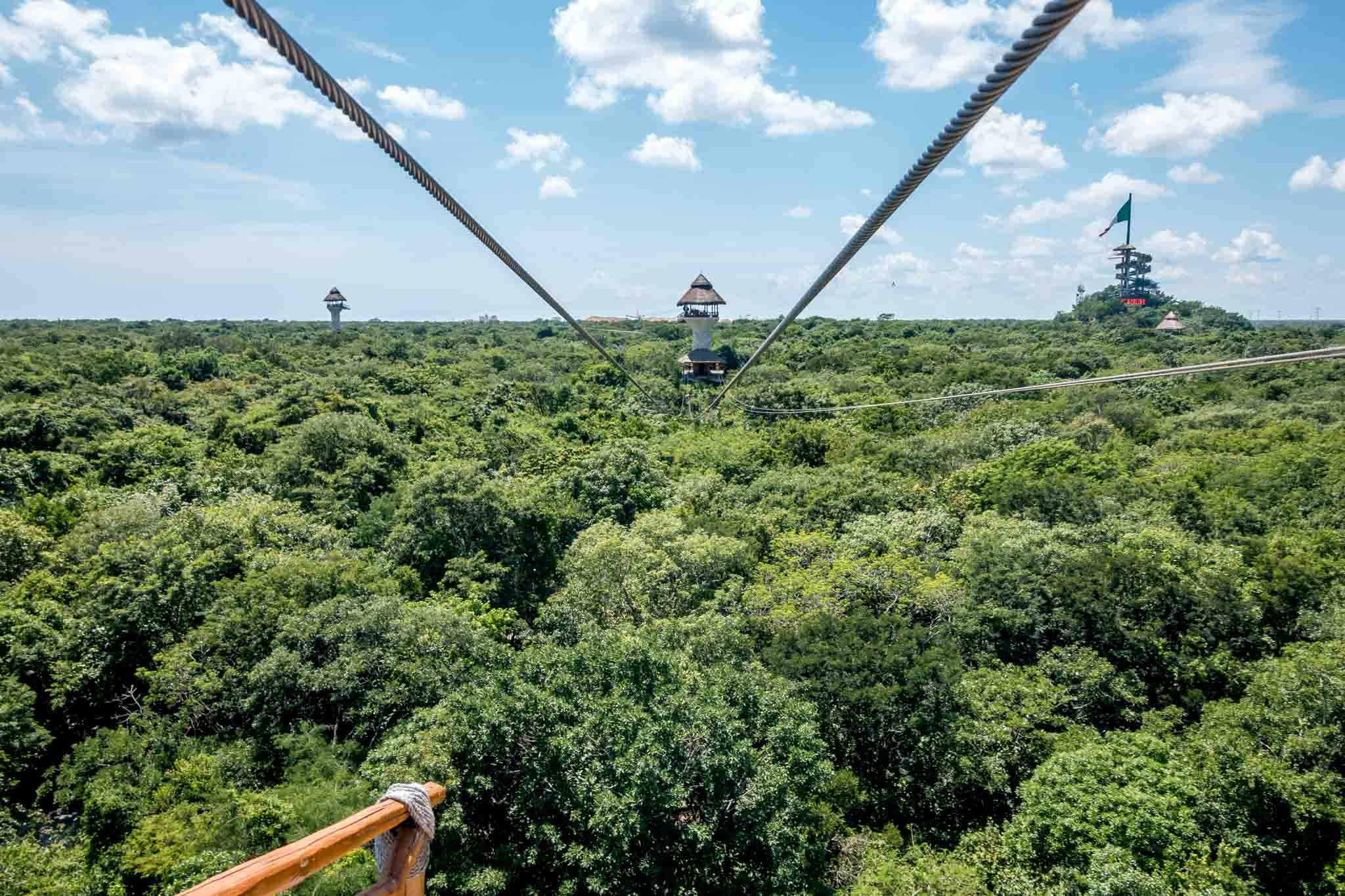 Zip lines above a tree canopy