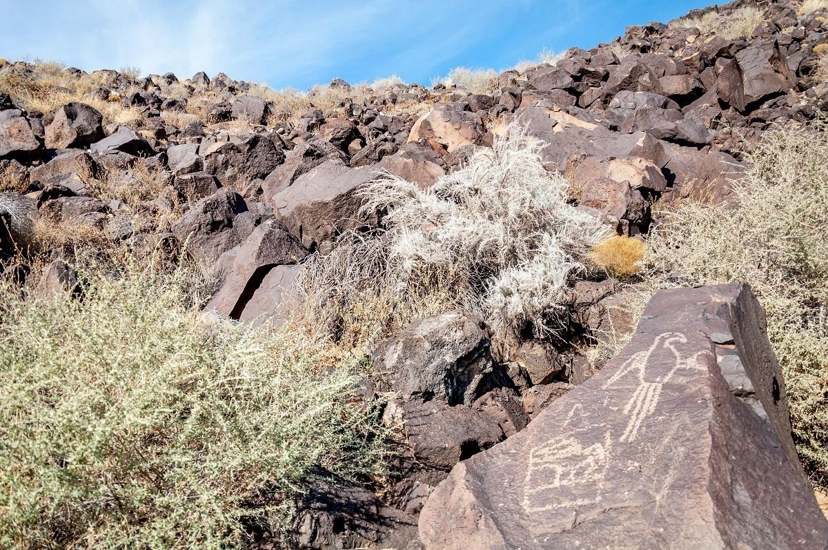 Bird petroglyph on a rock