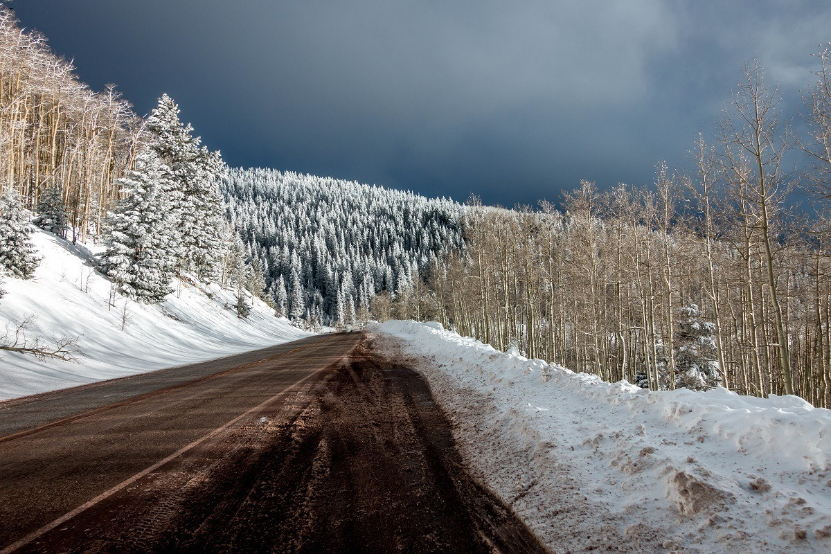 Fresh snow covering the trees in the Santa Fe National Forest