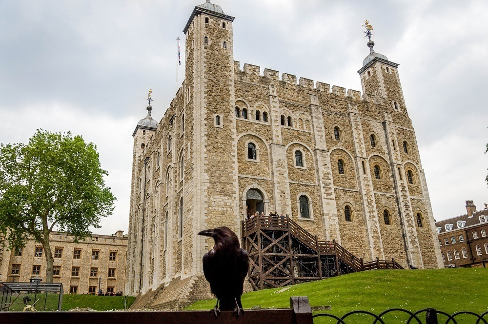 Raven in front of the Tower of  London, one of the Top 10 UNESCO World Heritage Sites