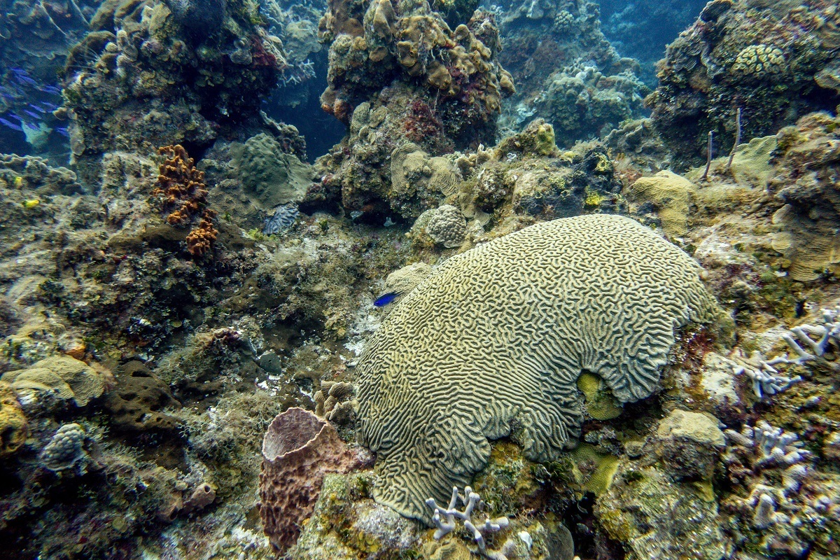 A brain coral formation in Cozumel