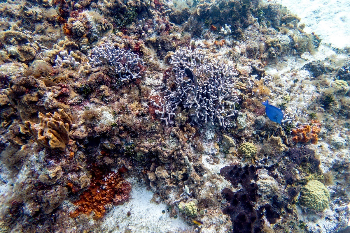 A coral formation on Playacar Reef in Mexico