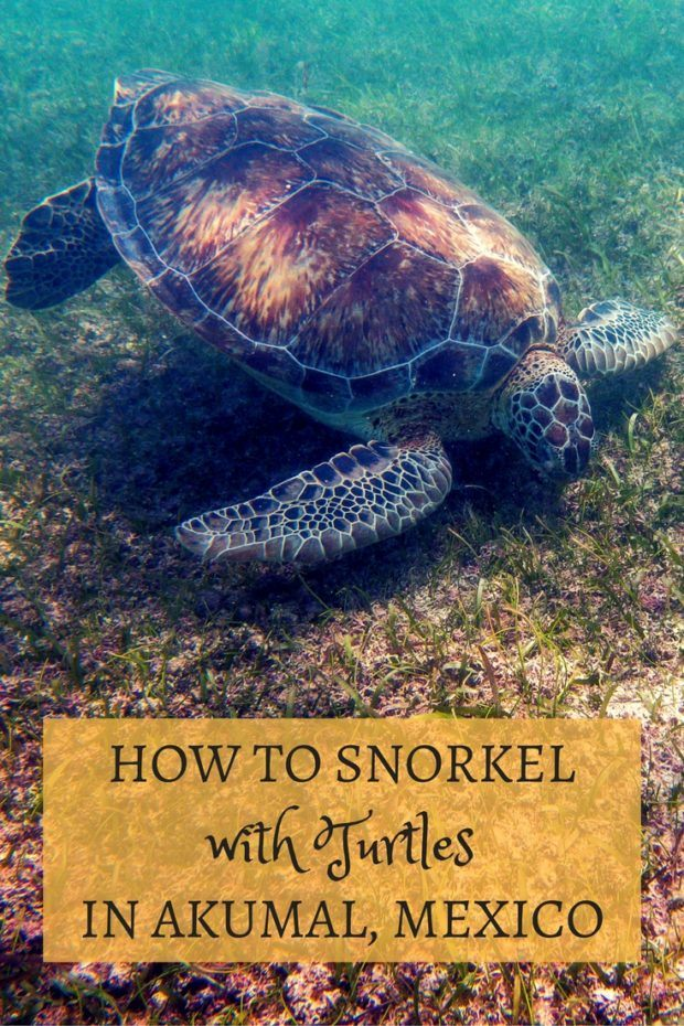 How to Snorkel with Sea Turtles in Akumal, Mexico